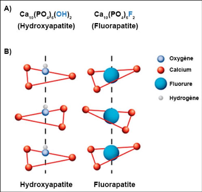 Schéma de la formation de cristaux de fluoroapatite